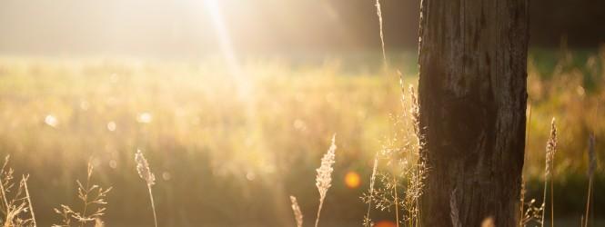 Sun Field
